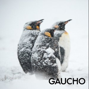 Developing Resilience Gaucho