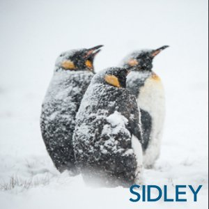 Developing Resilience Sidley