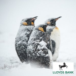 Developing Resilience_lloyds